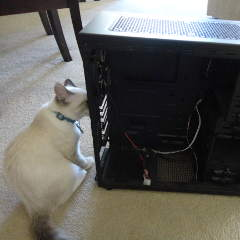 cat looking into computer case